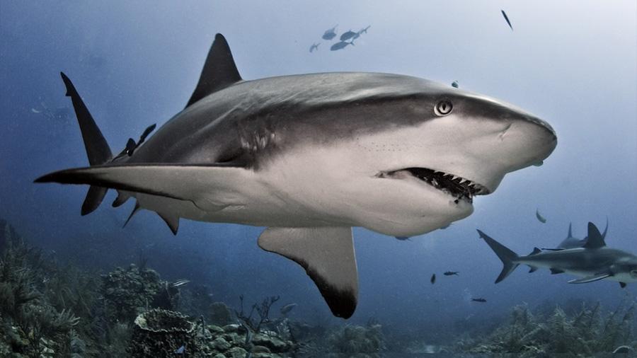 ¿A dónde van a comer los tiburones?