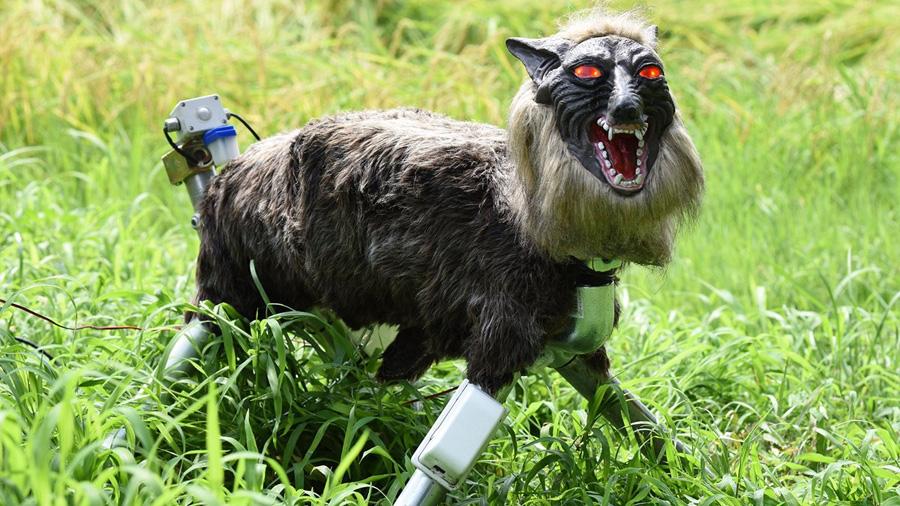 Super Monster Wolf, el espantoso lobo robótico que protege los cultivos en Japón