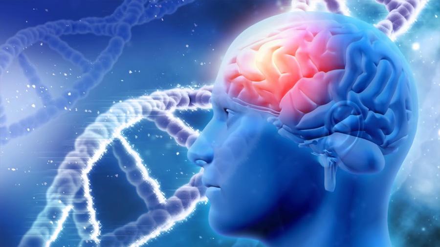 La nueva genética se adentra en los orígenes de la inteligencia humana