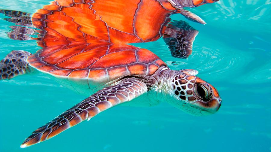 Casi la mitad de las especies del mundo podrá desaparecer en 60 años, según WWF