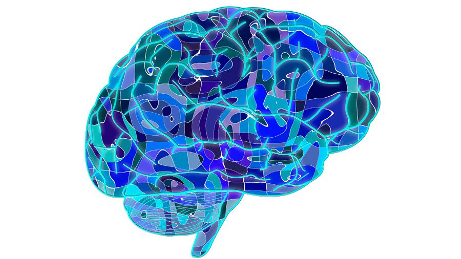 Descubren cómo se fragmentan las redes cerebrales mientras un individuo está inconsciente