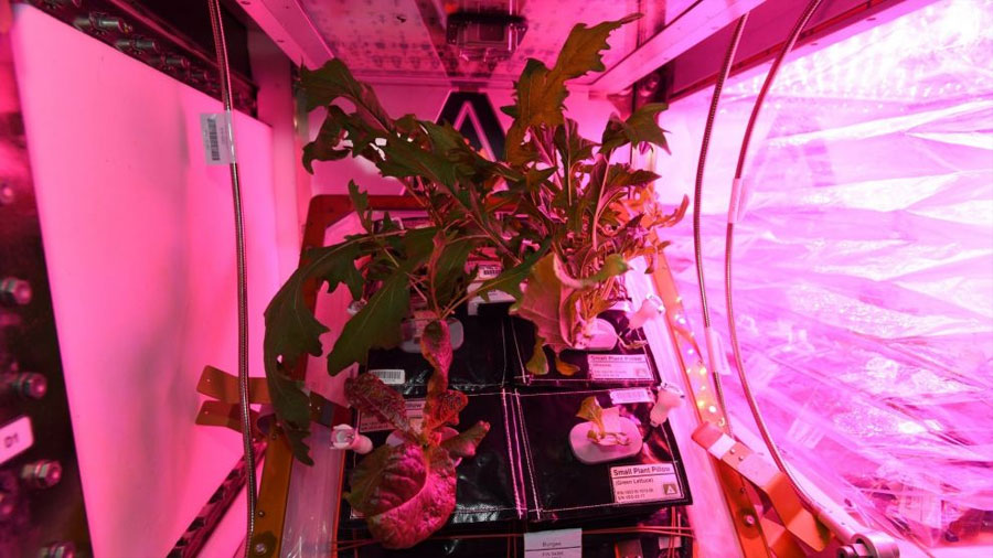 La comida del futuro: Astronautas logran cultivar vegetales en la Estación Espacial Internacional
