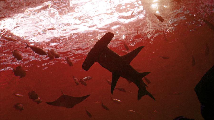 Investigadores descubrieron tiburones viviendo dentro de un volcán submarino activo