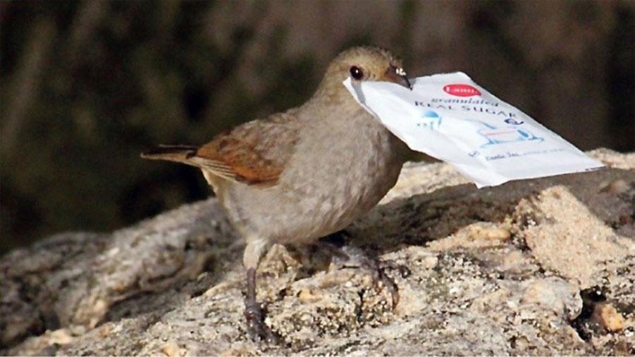 La base cerebral de la innovación es igual en pájaros y en humanos