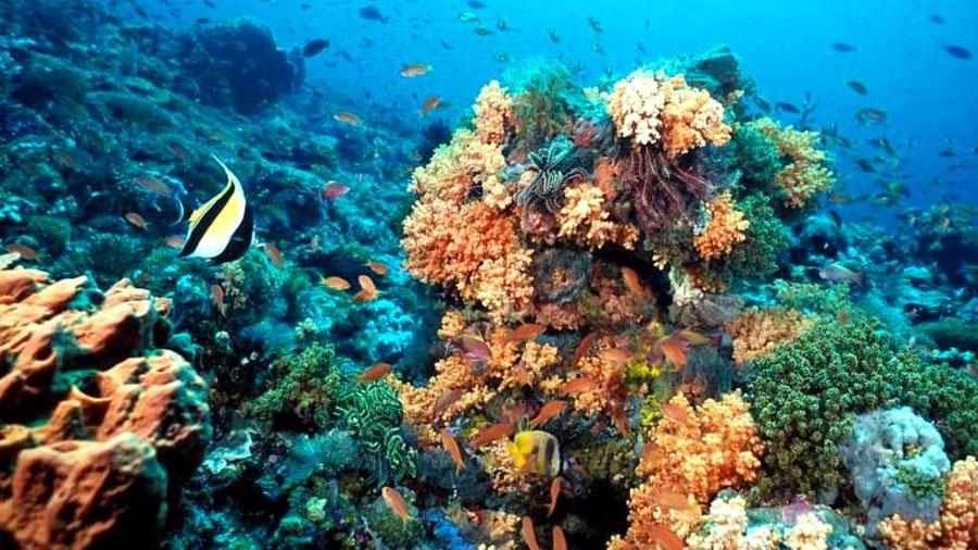 "Descubren la ""zona rarifótica"", que alberga múltiples nuevas especies de peces en arrecifes de coral"