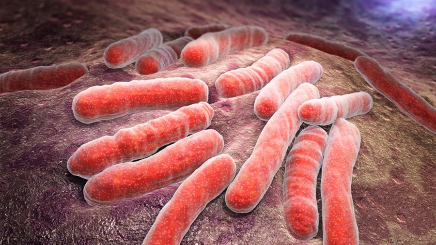 Un modelo predice que la tuberculosis aumentará en el futuro