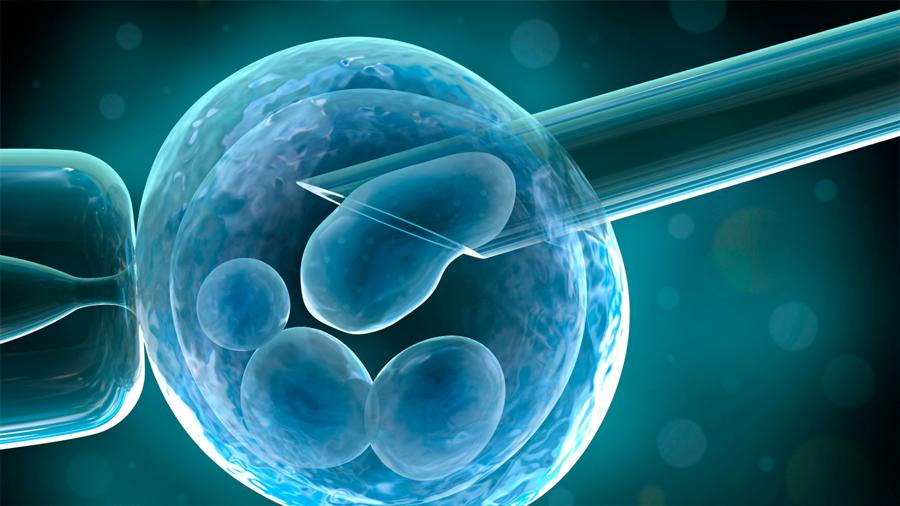 Experimentando con embriones humanos (cronología y desafió bioético)