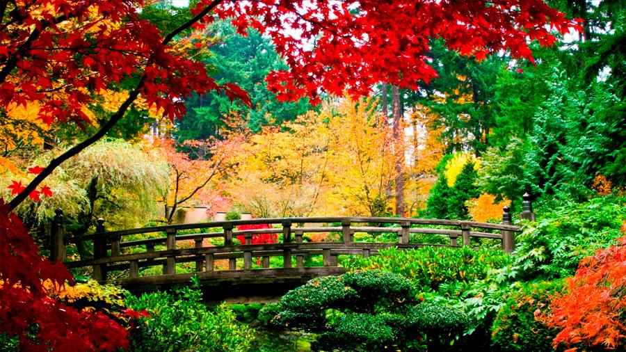 Los árboles de distintas especies 'se apoyan' para producir más madera