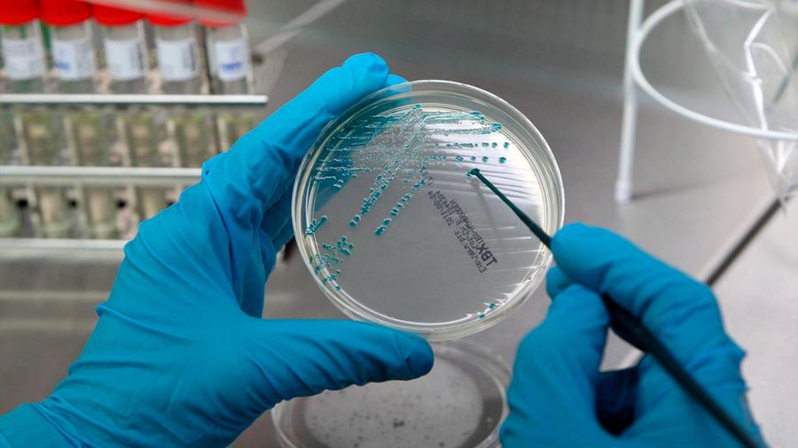 Bacterias que nos ayudan