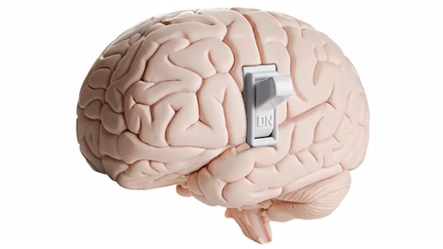 """Descubren el """"interruptor molecular"""" capaz de engañar al cerebro y de controlar la ganancia de peso"""