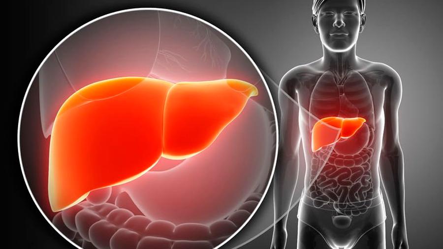 Descubren proteína responsable de la regeneración del hígado
