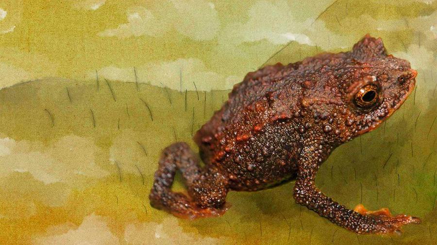 Las 9 especies desconocidas que científicos descubrieron en el Amazonas