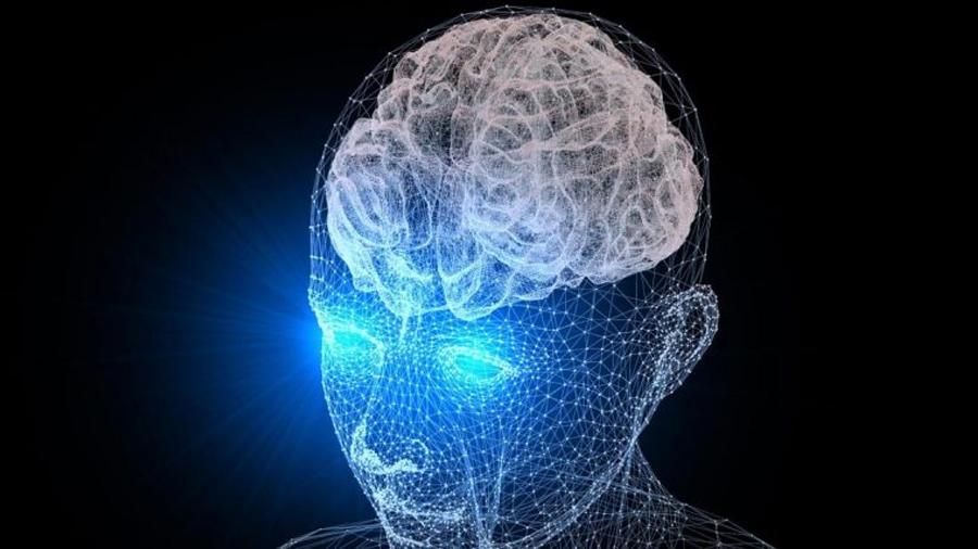 El cerebro nunca para de crecer