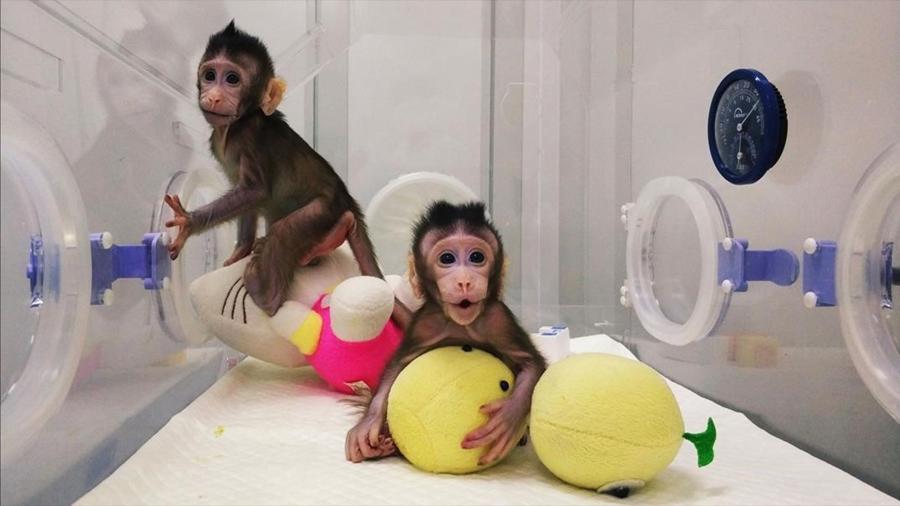 China no planea clonar humanos pese a éxito con macacos