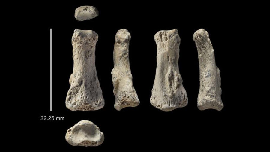 Encuentran en Arabia Saudí un dedo de hace 88,000 años que puede cambiar la historia de la humanidad