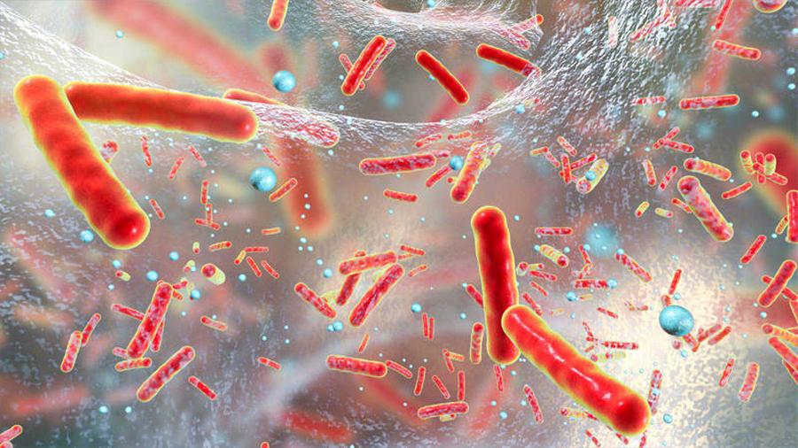 Desvelan cómo estalla la resistencia a los antibióticos en las bacterias más agresivas