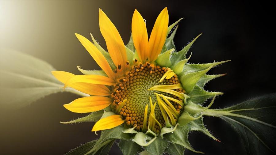 Y a qué hora saben las flores que es tiempo de florecer