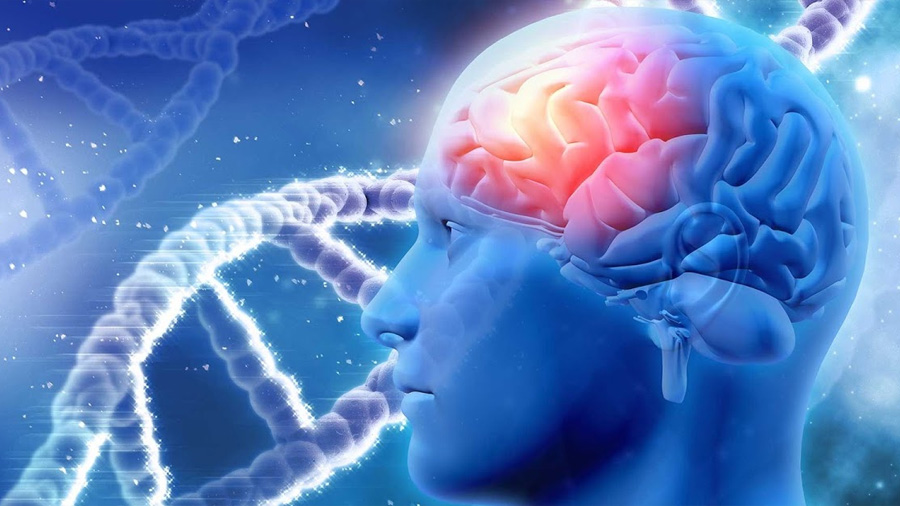 Un gen que provoca Alzheimer ha sido neutralizado por primera vez en células humanas cerebrales