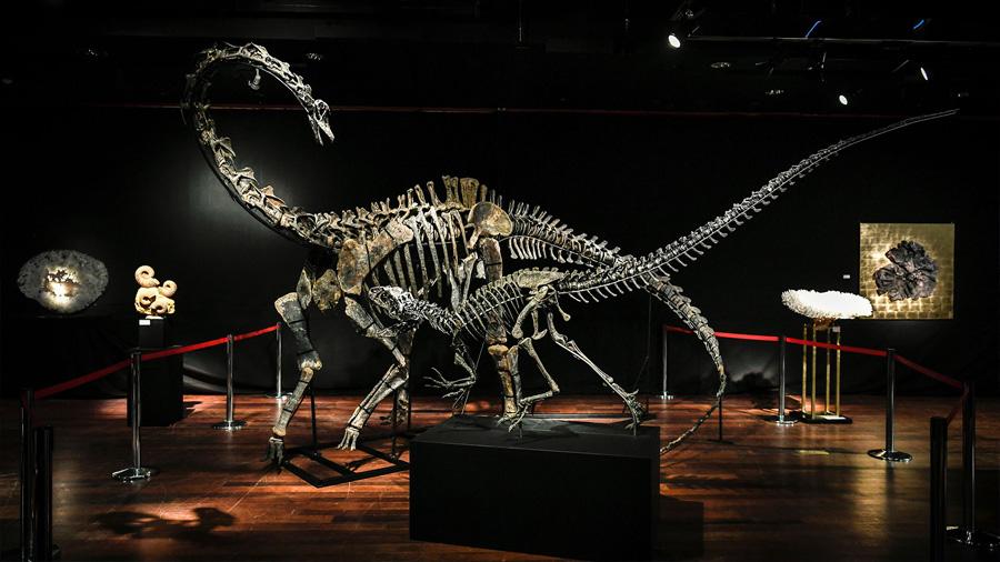 Subastan dos esqueletos de dinosaurio por más de 1.7 millones de dólares cada uno