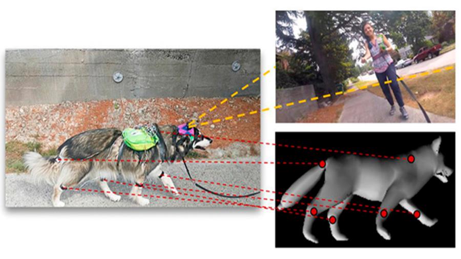 La inteligencia artificial aprendió a predecir los movimientos de los perros