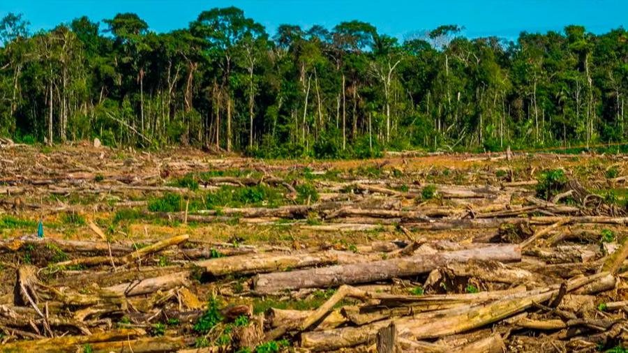 Las actividades humanas han dañado el 75% de la superficie terrestre