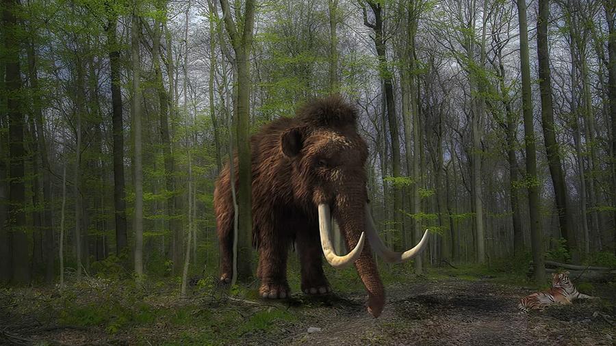 Científico planean devolver a la vida al mamut vía su pariente vivo más cercano, el elefante asiático