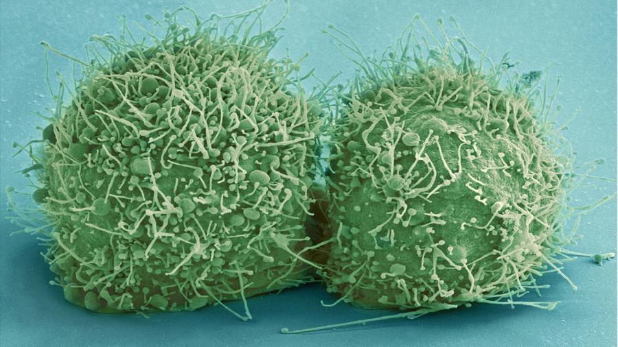 Increíble vídeo muestra por primera vez células individuales moviéndose dentro de un ser vivo