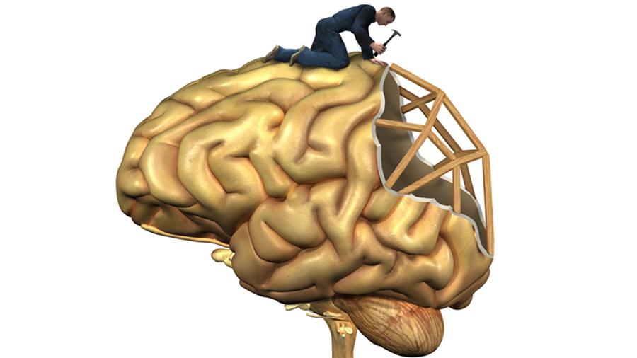Logran observar cómo se repara el revestimiento del cerebro