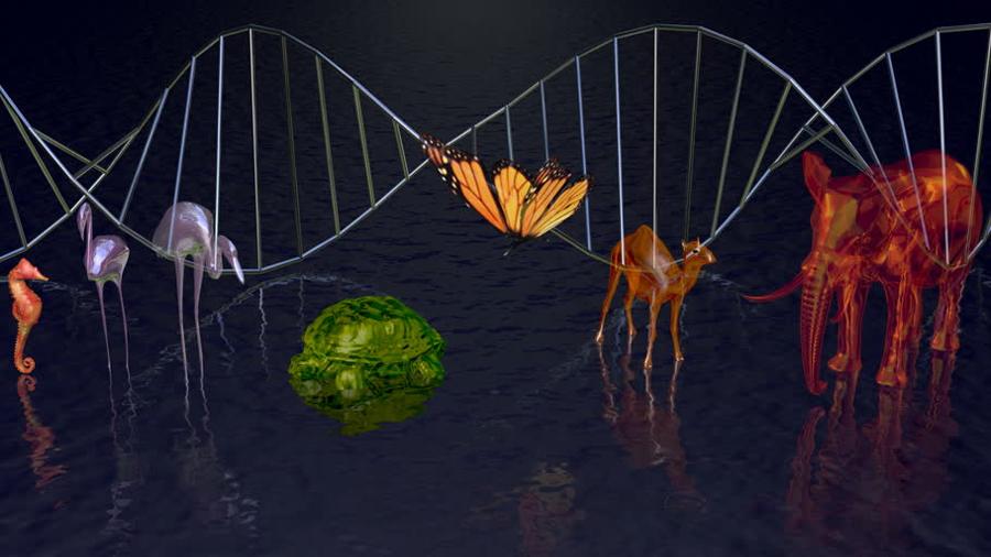 Consorcio mundial de científicos busca secuenciar el genoma de todas las especies del orbe
