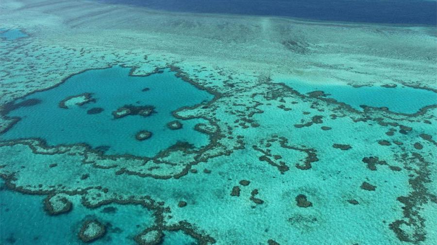 Descubren barrera de coral amazónico de 56 mil kilómetros cuadrados