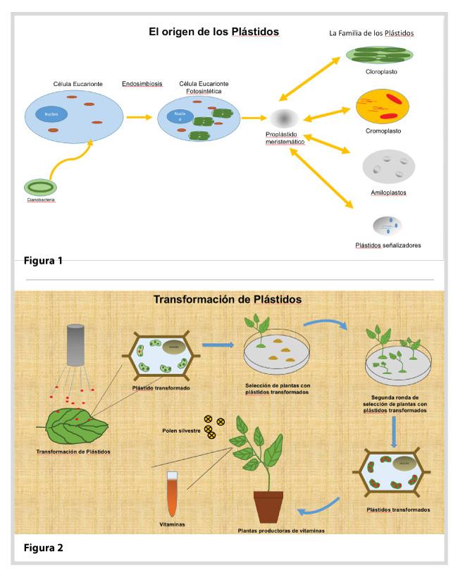 Los plástidos: fábricas metabólicas para el futuro