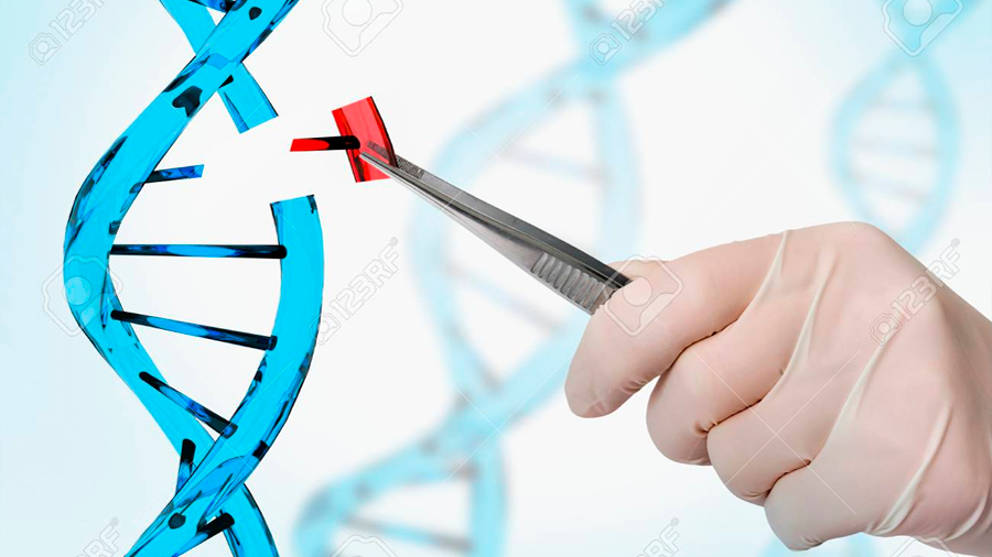 Bienvenido a la era de la edición del ADN: corta, pega y copia