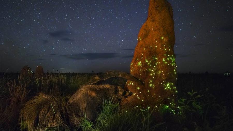 Descalifican a un ganador mundial de fotografía de naturaleza por retratar un animal disecado