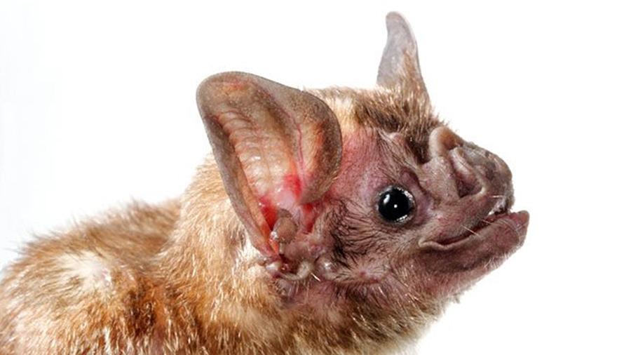 Análisis de la transformación de murciélagos en vampiros