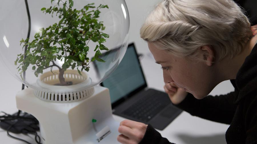 Crean a Florence, un dispositivo para comunicarte con las plantas