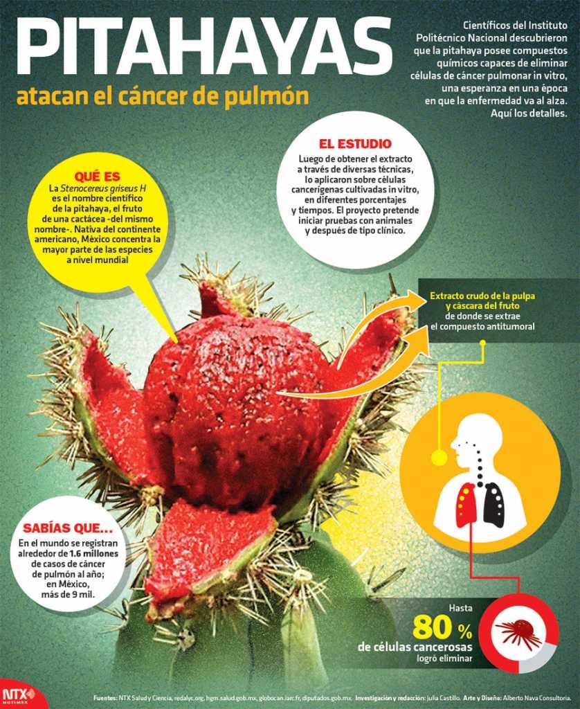 Pitahayas atacan el cáncer de pulmón