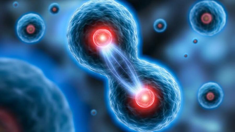Células consideradas inútiles son el 'arma secreta' de nuestro cuerpo contra infecciones como el VIH