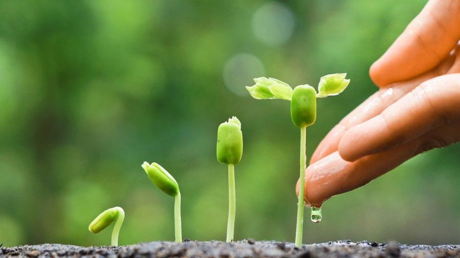 Los científicos descubren la hormona que ayuda a las plantas a detectar la sequía