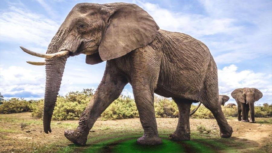 Los elefantes parecen comunicarse haciendo vibrar el suelo