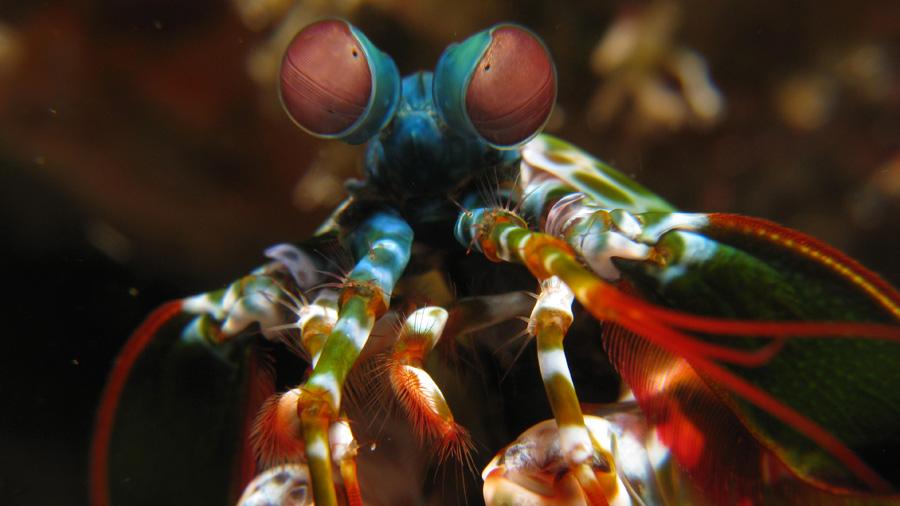 Esta criatura podría tener los ojos más extraños del reino animal