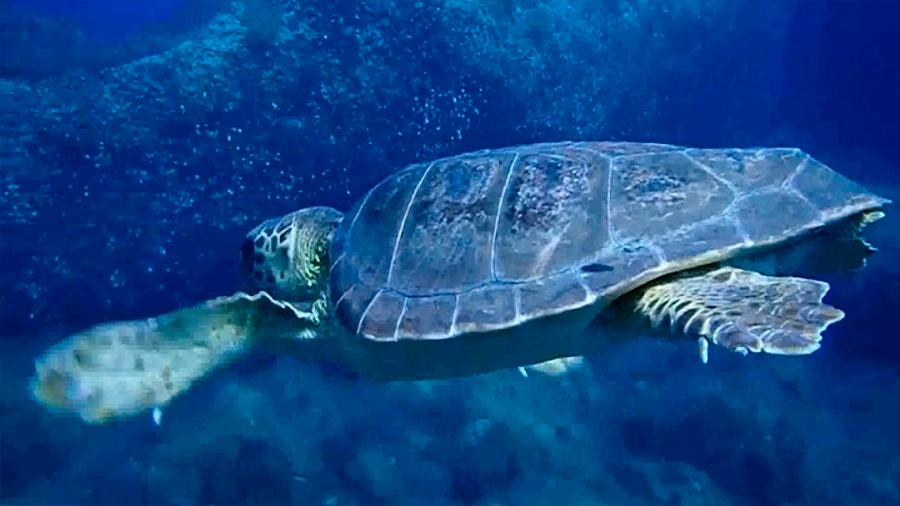 La mayoría de áreas marinas protegidas será inhabitable en 80 años