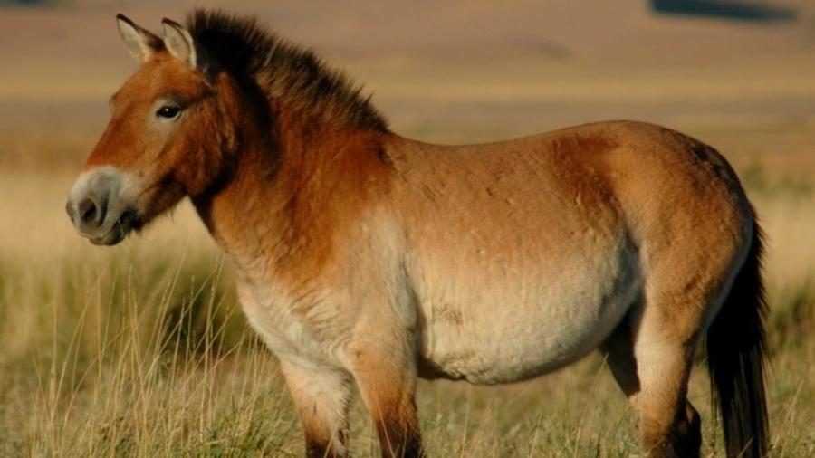 Humanos prehistóricos sin descendencia moderna domesticaron el caballo