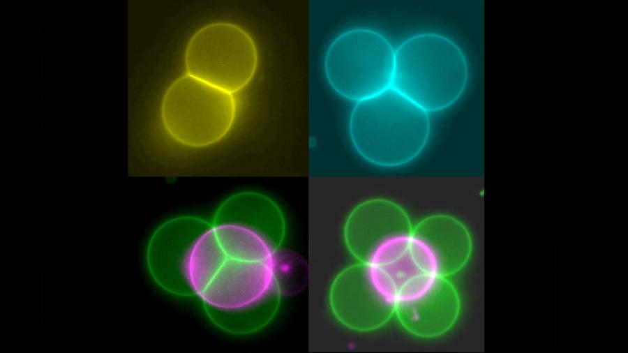 Rayos tractores para crear células artificiales que actúan como tejidos