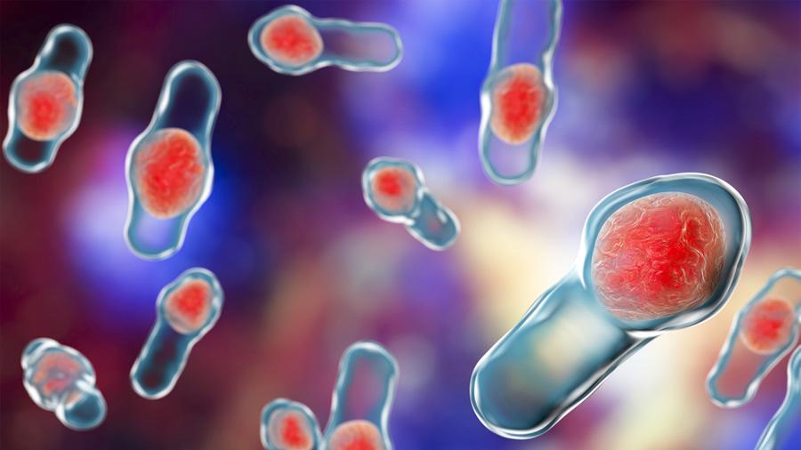 """Logran método contra una toxina """"muy viva"""" que mata por infecciones gastrointestinales"""