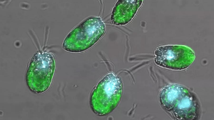 """Científicos hallan un """"virus gigante"""" en la costa de Hawaii"""