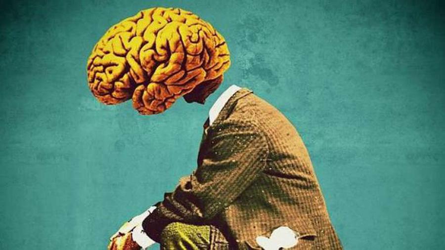 La capacidad cognitiva depende del tamaño de la corteza cerebral