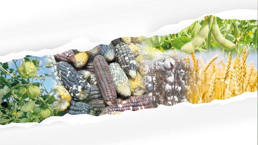Las dimensiones de los OGMs