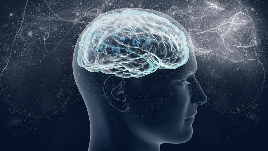 Descubierto un mecanismo que permite la transmisión de información por el cerebro