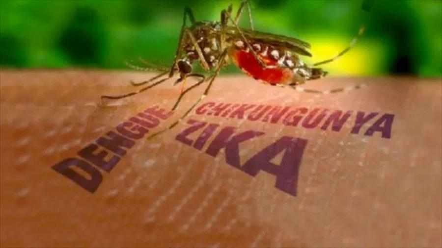 Un mapa predictivo de los brotes de dengue, chikungunya y Zika