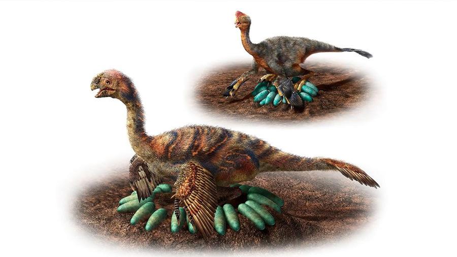 Así empollaban sus huevos los pesados dinosaurios